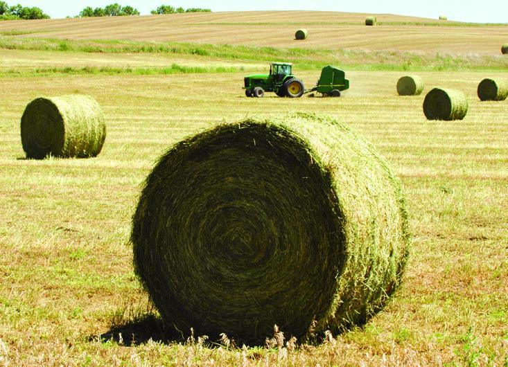 Large, round hay bales