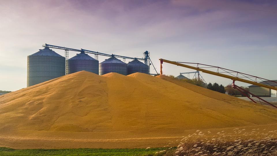 Piled grain and bins