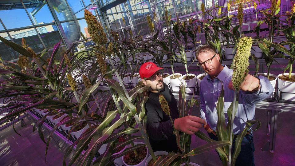 James Schnable examines a sorghum plant with Andy Benson
