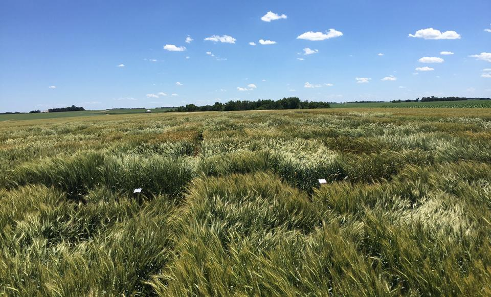 UNL variety trials conducted in eastern Nebraska are an important process to help guide grower's variety selection.