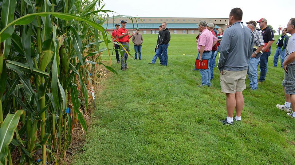 Attendees view maturing corn plants at a previous clinic.