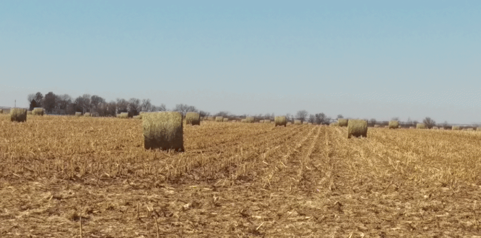 Corn field with baled residue