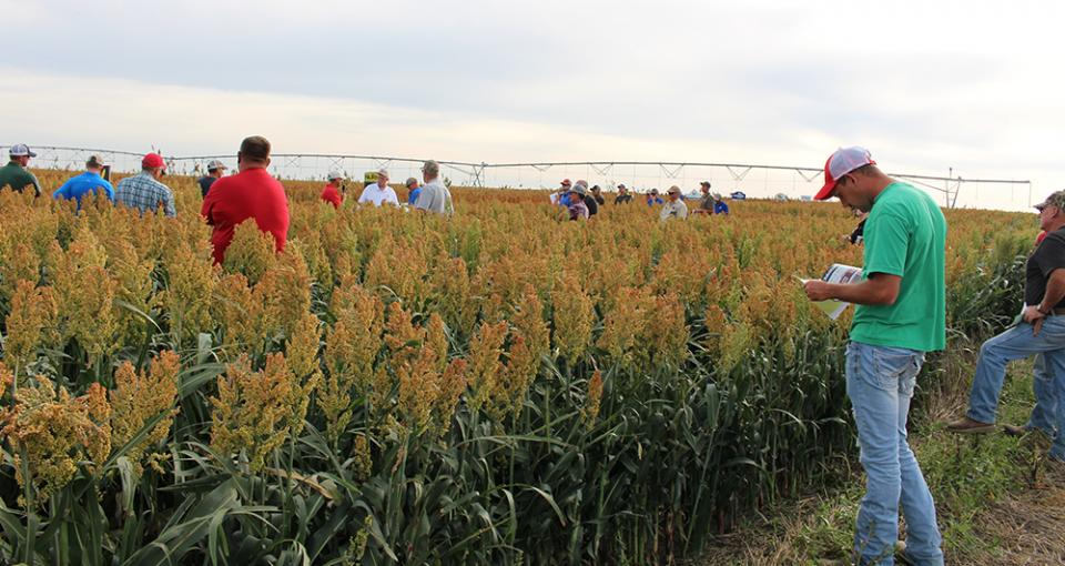 Farmers examine a field or irrigated sorghum at a Sorghum Field Day near Trenton in 2017. This year field days will be held near Trenton and Farwell.