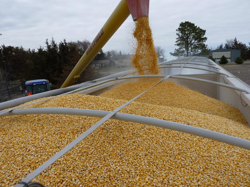 Combine loading grain into a truck