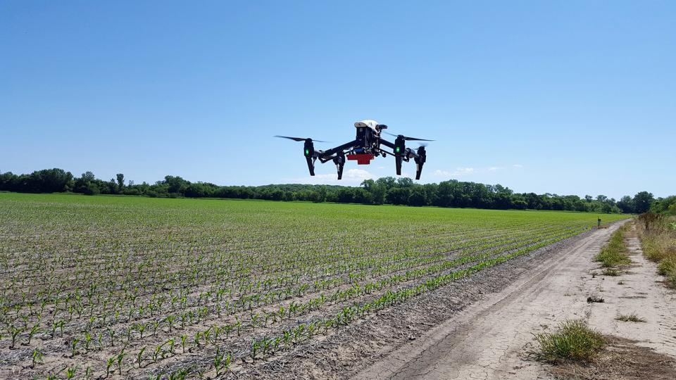 Drone flight over corn