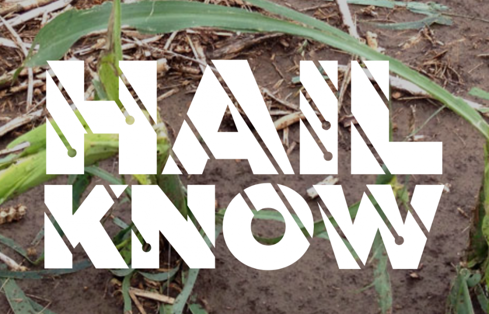 The Hail Know website offers timely information to help farmers respond when hail strikes their crops.