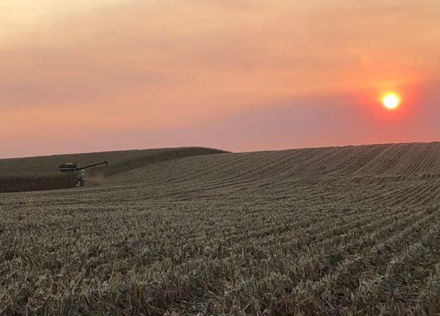 Combining corn at sunset