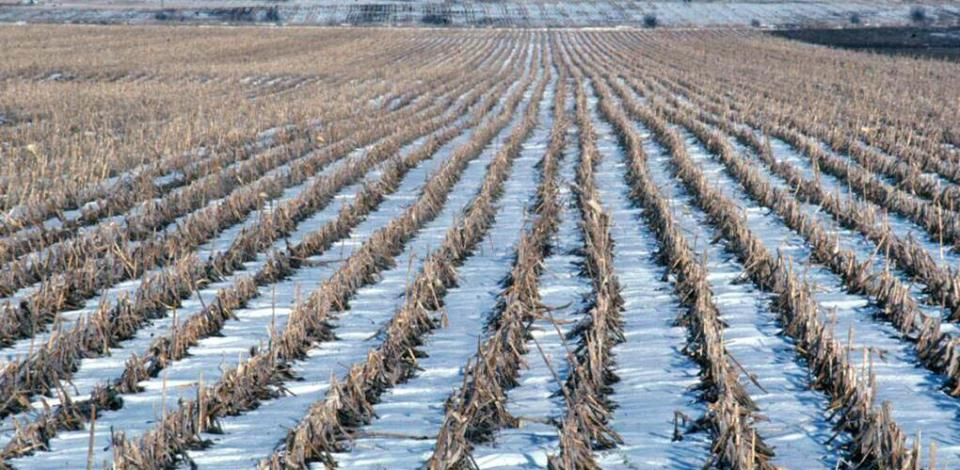 snow between residue rows