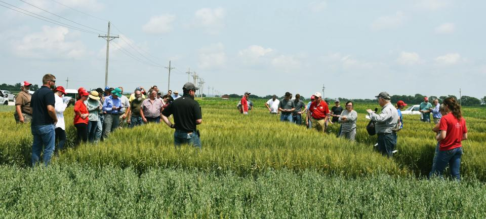 2018 Wheat Field Day at the Eastern Nebraska REC near Mead.