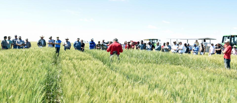 2018 wheat field day at the High Plains Ag Lab