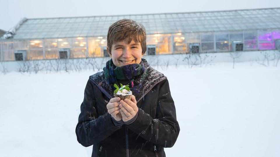 Rebecca Roston, assistant professor of biochemistry, holds a pea plant outside the Beadle Hall greenhouses. Roston, who recently earned a National Science Foundation CAREER award, is studying how more than 30 species of plants respond to freezing. (Photo by Craig Chandler)