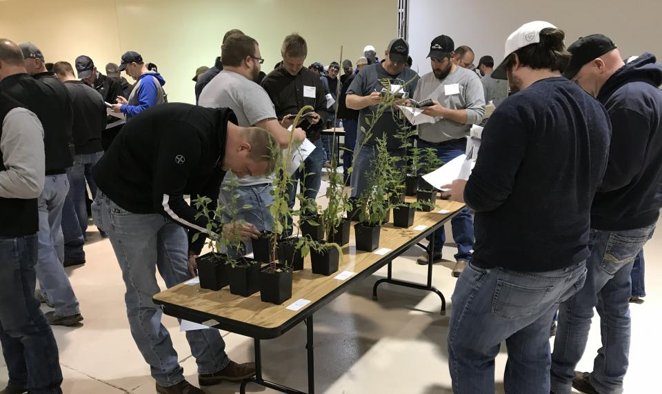 Crop Scout Training participants identifying weeds during the 2018 course.