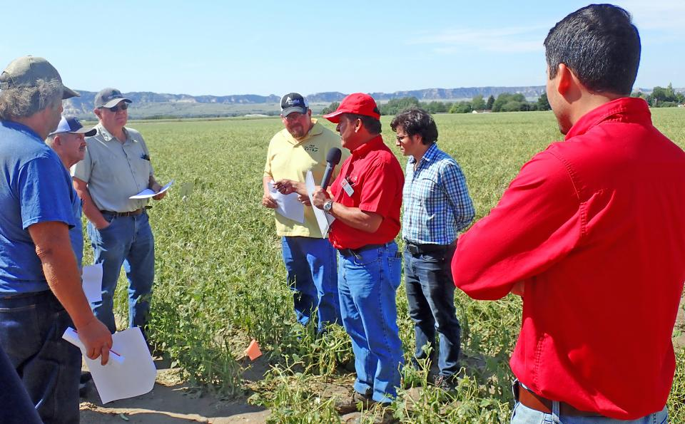 Carlos Urrea, dry bean breeding specialist at the Panhandle Research and Extension Center in Scottsbluff (center, in red shirt), stands in a hail-damaged dry bean variety plot at the Panhandle Center, during the annual Panhandle Ag Research and Technology Tour (PARTT) in August 2019.