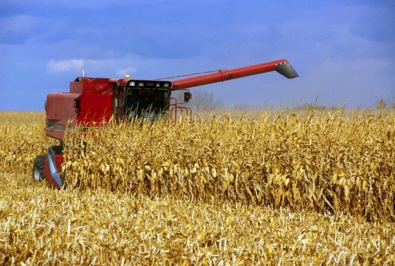 Combining corn
