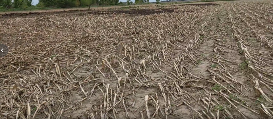 Unplanted acres with corn residue