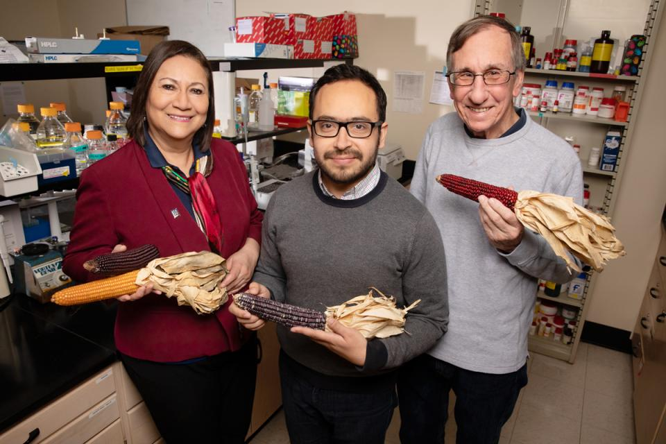 Scientists at the University of Illinois found that compounds in purple corn fight obesity, inflammation and insulin resistance in mouse cells. The team includes, from left, food science professor Elvira Gonzalez de Mejia, postdoctoral researcher Diego Luna-Vital and crop sciences professor John Juvik. (Photo by L. Brian Stauffer)