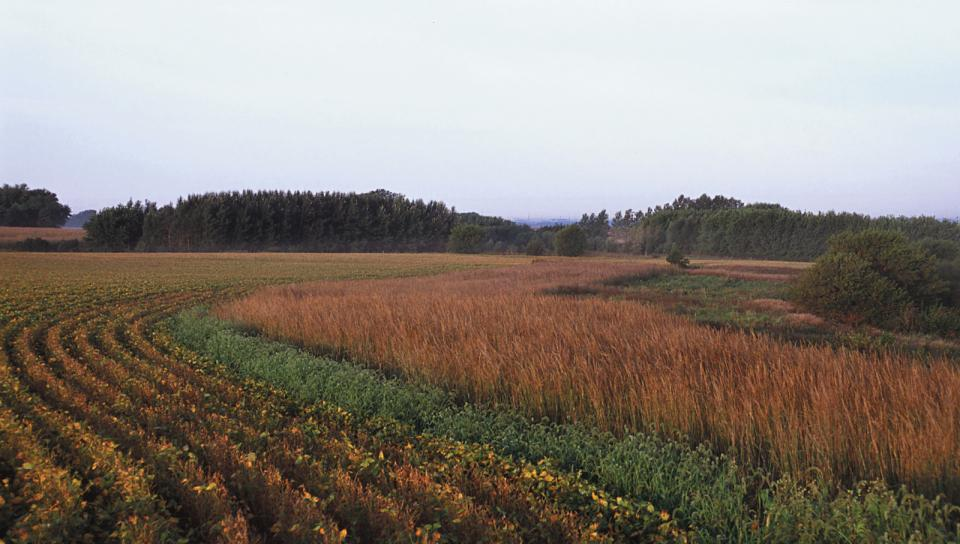 Grass and tree riparian buffer