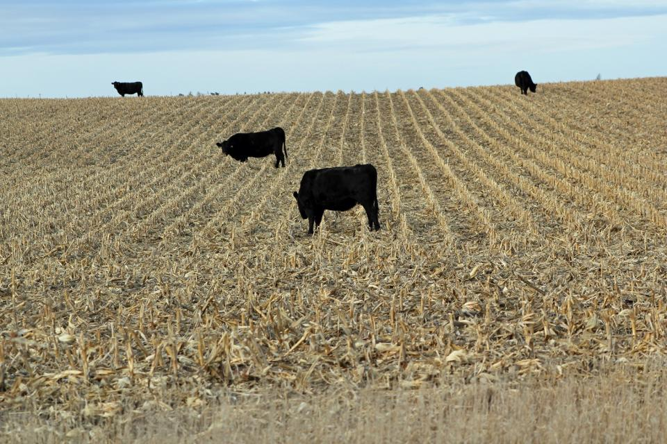 The Crop Residue Exchange continues to expand to better connect livestock producers with available forage resources.