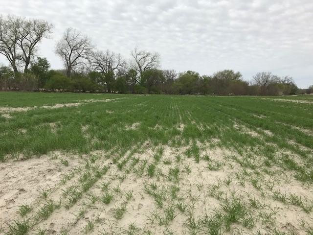 Figure 1. This wheat field just off the Cedar River near Fullerton has 4-6 inches of sediment from spring flooding. Prevented planting and cover crops can help protect against soil erosion and provide feed for cattle. (Photo by Megan Taylor)