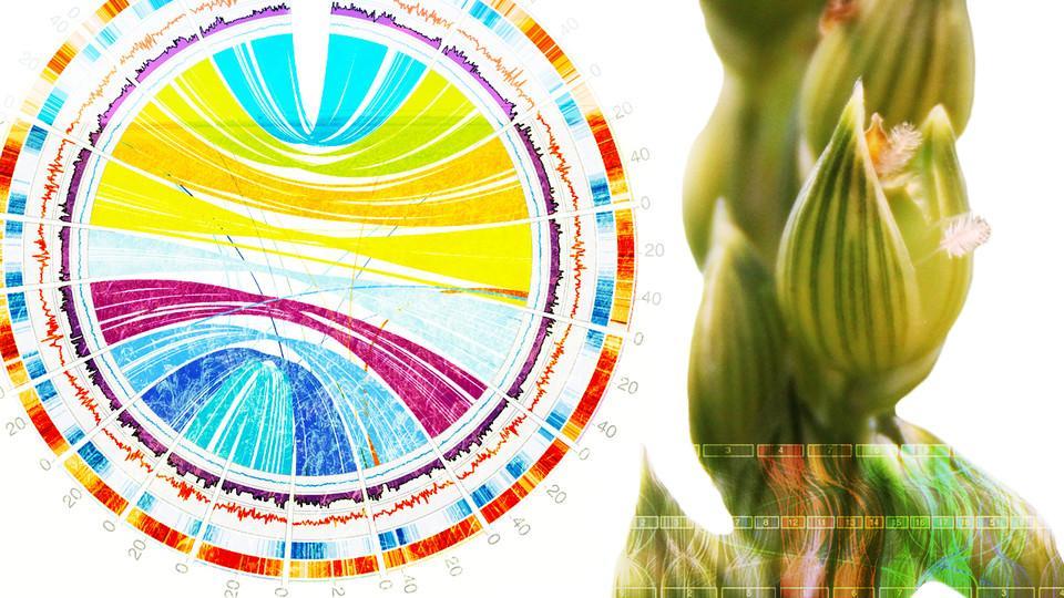 Visual representation of gene sequences