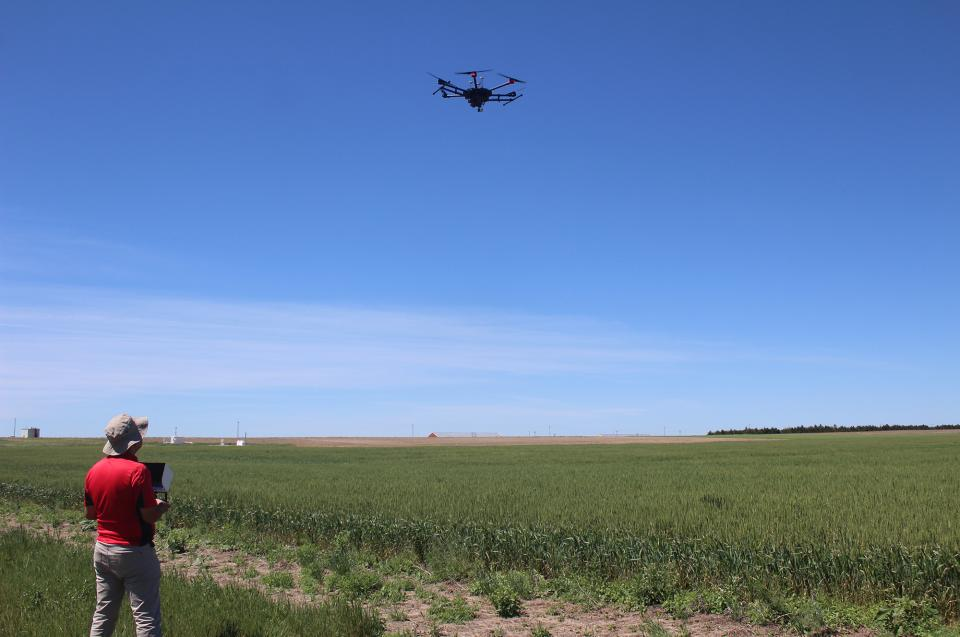 Bijesh Maharjan, soil and nutrient management specialist, pilots an unmanned aerial vehicle (UAV, or drone) equipped with sensors over a wheat test plot.