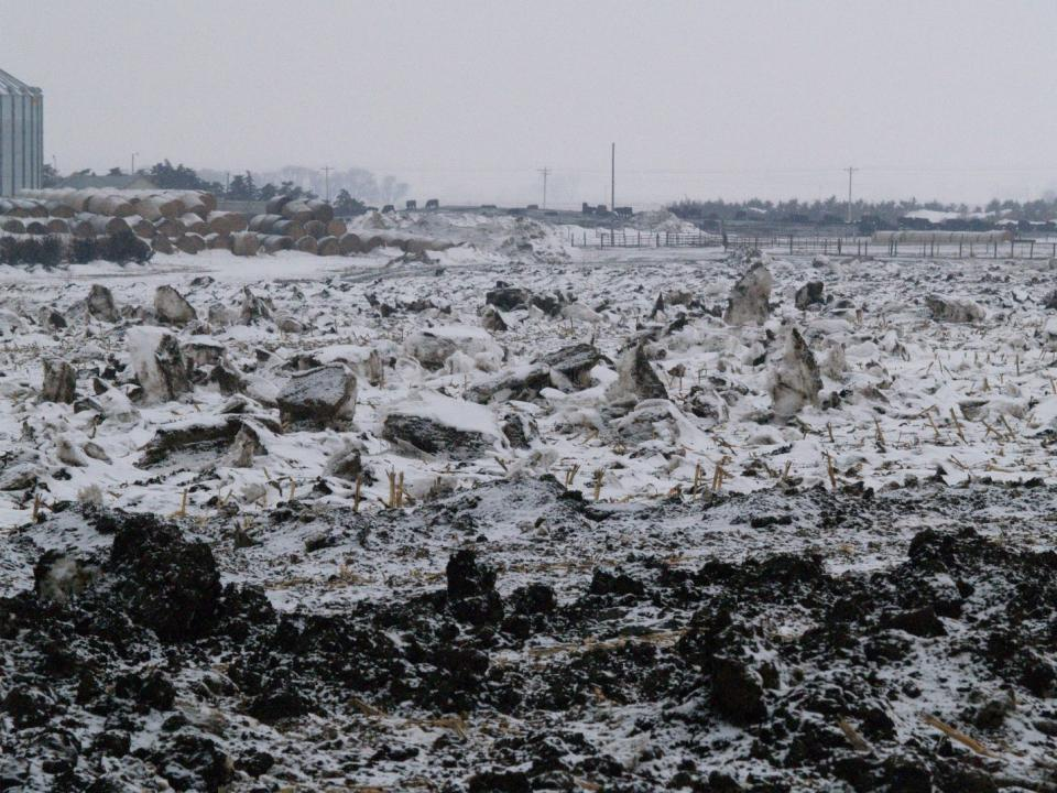 snow covered manure