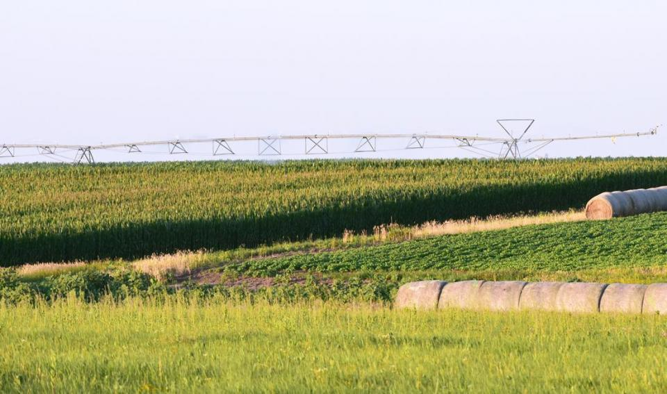 corn and soybean field with center pivot irrigation