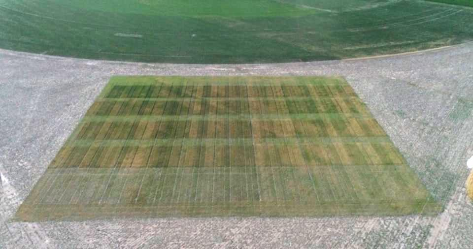 aerial view of wheat trial field