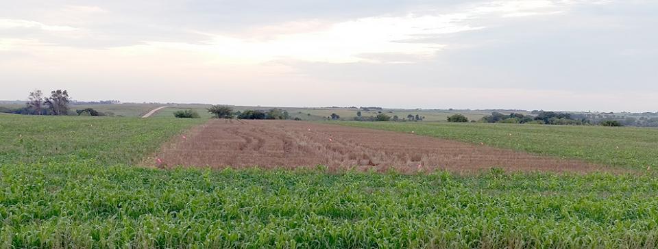 Herz farm cover crop field