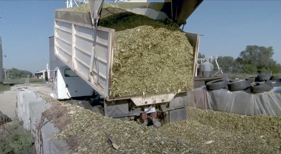 Truck dumping silage