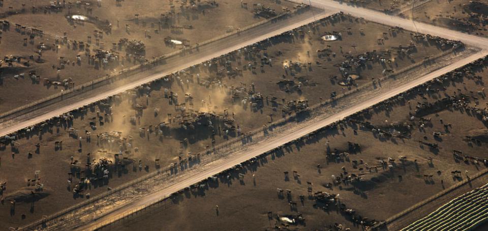Feedyard in aerial view
