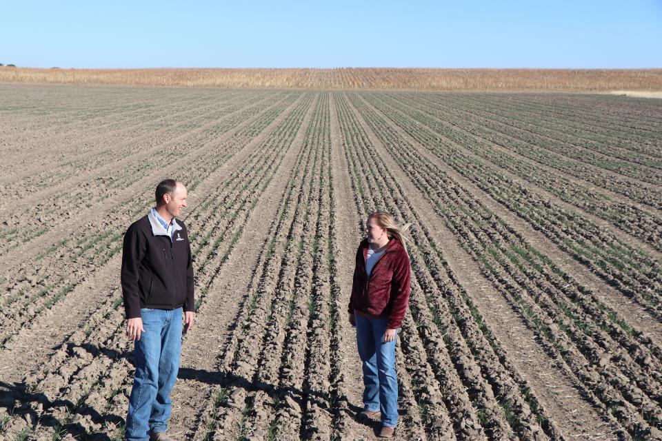 Extension educators view winter wheat plots