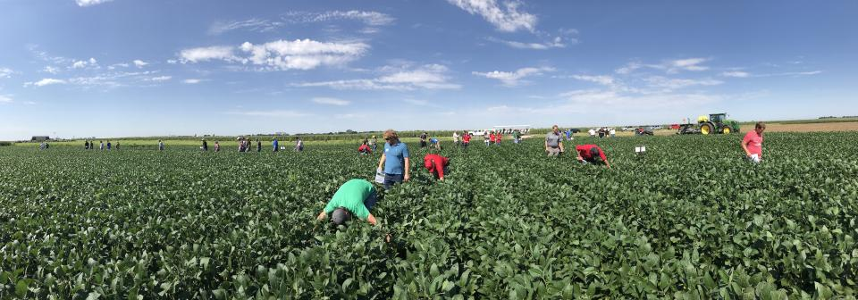 Farmers examine crops in field day
