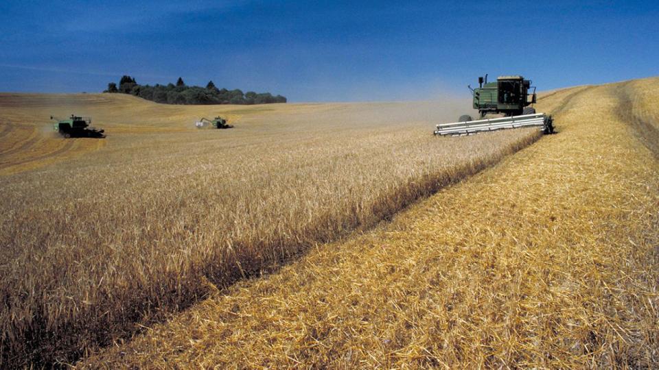 Harvesting crops in field