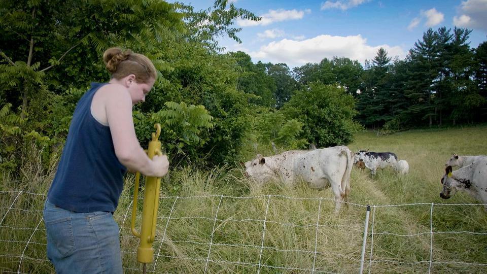 Farmer with livestock