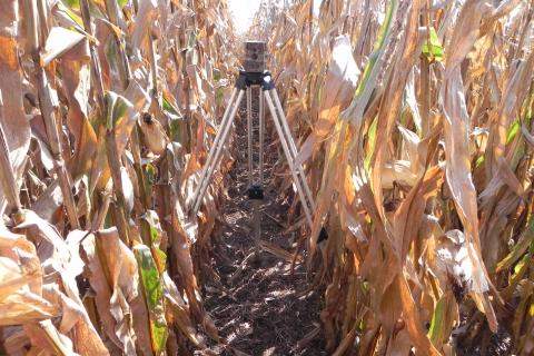 Field camera used to capture corn growth over a season