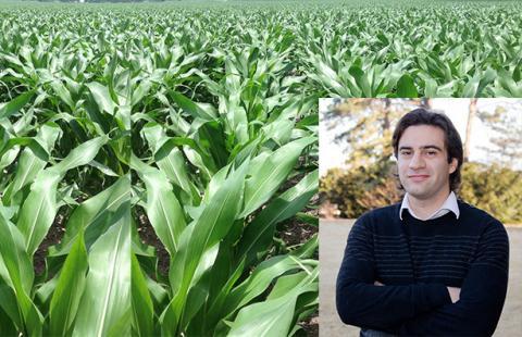 Patricio Grassini and a field of corn