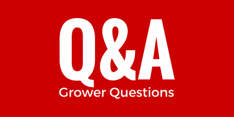 CW Q&A