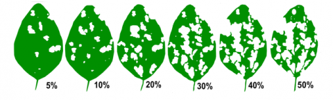 Soybean defoliation levels