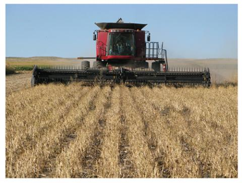 Direct harvest of dry edible beans