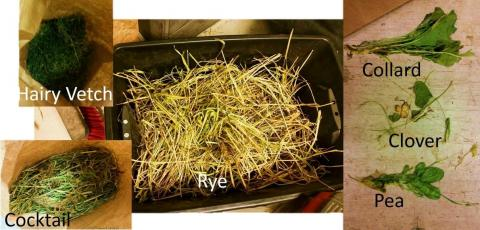 Types of cover crops studied