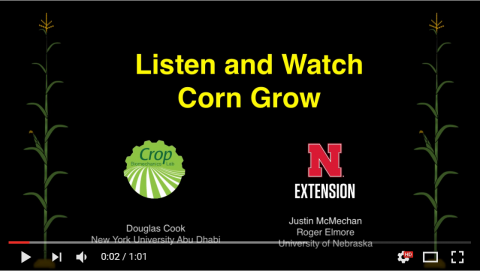 Slide promoting Listen to corn grow time lapse video