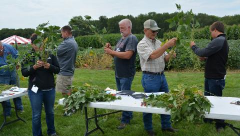 Participants at the 2016 Soybean Clinic examining plant injury at various crop growth stages.
