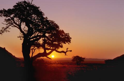 A scene in Sub-Saharan Africa