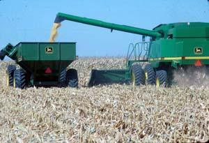 To avoid compacting more of the field, the grain cart should run down the same row middles as the combine. An auger extension may be needed on the combine to get the wheel tracks to line up. The wheel spacing on the combine, tractor, and grain cart should be adjusted to all run between the rows.