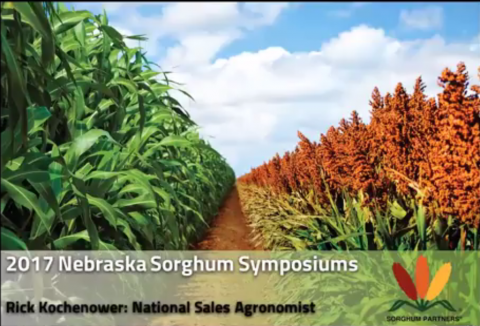 Photo of sorghum and corn fields side by side from Sorghum Symposium presentation