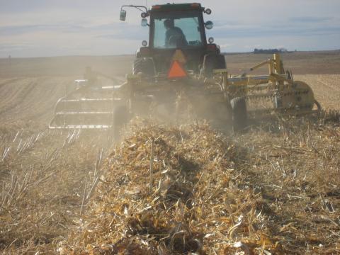 Raking Downed corn