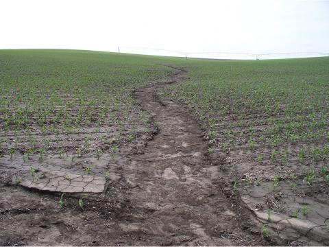 Ephermeral gully in a corn field.