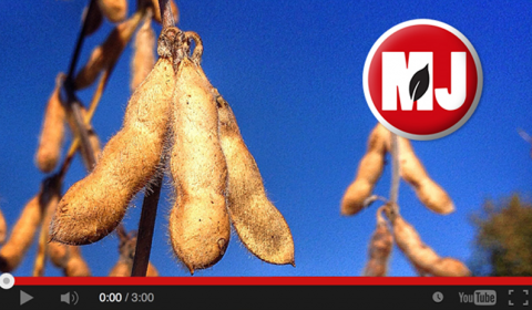 Market Journal video capture
