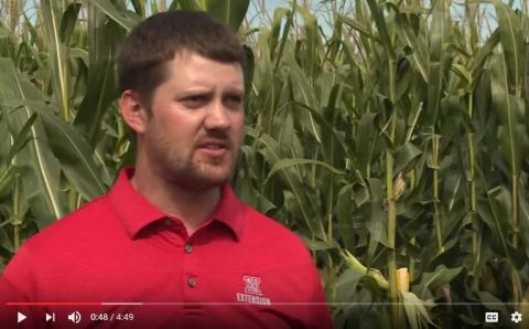 Nebraska Extension Educator Nathan Mueller on estimating corn yields.